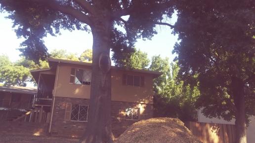 Neighborhood Tree, Sacramento