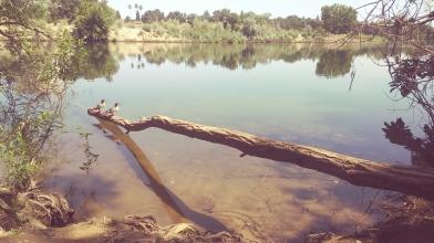American River, Sacramento