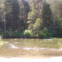Carlton Campsite, river